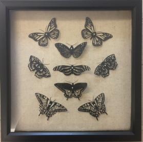 Butterflies in Black