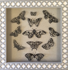 Butterflies in Decorative Box