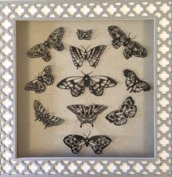Butterflies in Decorative Box